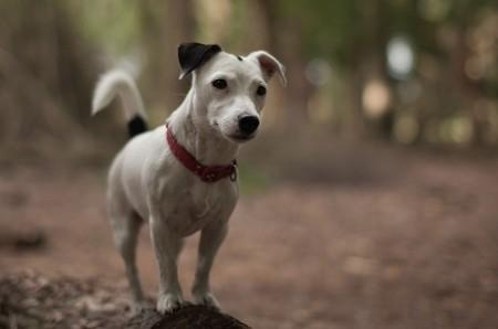 Isleworth pet services