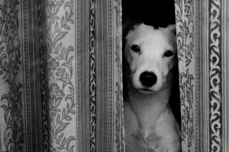 MY DOG POPPY