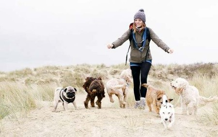 amy the dog walker