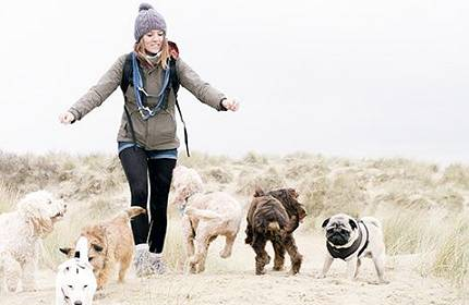 amy dog walker