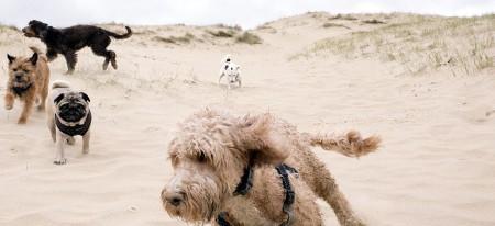 isleworth dog walker